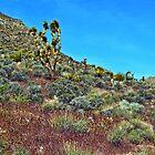 Mohave Desert by Mike Pesseackey (crimsontideguy)