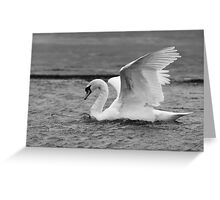 Mute Swan Monochrome Greeting Card