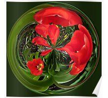 Spherical tulips Poster