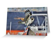 Osprey's Fresh Kill Greeting Card