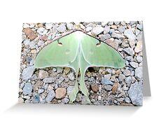 Big Beautiful Green Luna Moth Greeting Card