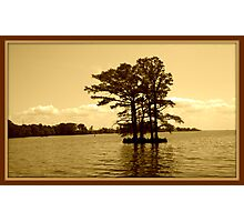 Cypress Tree in the Bay Photographic Print