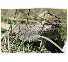 Grouchy Bearded Dragon Poster