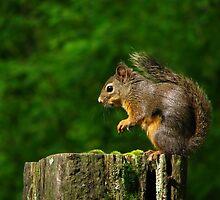 Squirrel by Tracy Friesen