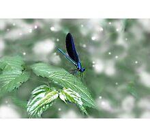Leaf Dancing Photographic Print