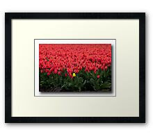 ..if Women are like Tulips.. Framed Print
