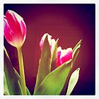Easter Tulips by Kevin Bergen