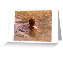 Where Did That Fish Go! Greeting Card