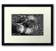 Sleepy Graylag Goose (Black and White) Framed Print