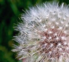 Make a Wish... by laurie13
