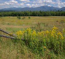 White Mountains & Meadows by Sheri Bawtinheimer