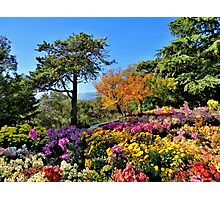 The blossoming fall Photographic Print