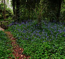 Bluebell glade, Tintern Abbey, Saltmills, County Wexford, Ireland by Andrew Jones