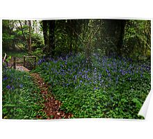Bluebell glade, Tintern Abbey, Saltmills, County Wexford, Ireland Poster