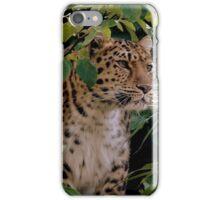 Amur Leopard Two iPhone Case/Skin
