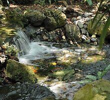 Tropical Stream in a Hammock by photoprol