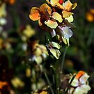 Spring Flowers 2 by Mike Topley