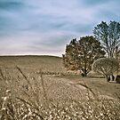 Agriculture lanscape by Denis Charbonnier