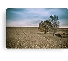 Agriculture lanscape Canvas Print