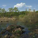 Spring on a bog by VallaV