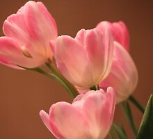 Tulips in soft light.... by DonnaMoore
