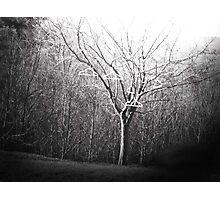 The Coat Hanging Tree Photographic Print