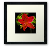 Azalea Single Flower Framed Print