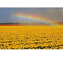 Rainbow & Tulips Photographic Print