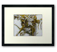 Ribbon  Seaweed  Framed Print