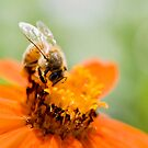 Busy Bee by Lucy Hollis