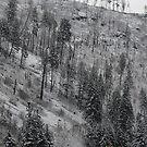 Idaho's Stark Winter by Charity Thompson