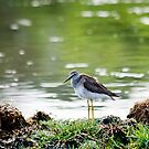 Yellow Legs by Lucy Hollis