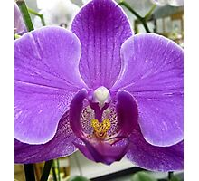 Orchid Four Photographic Print