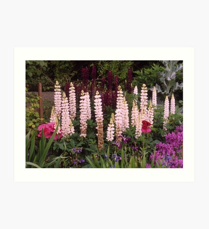 Cottage Garden, Lupin border, UK. Art Print