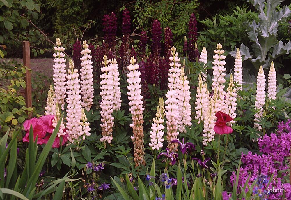 Cottage Garden, Lupin border, UK. by johnrf