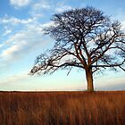 Shubenacadie Tree by RBuchhofer