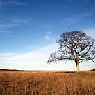 Shubenacadie Tree 2 by RBuchhofer