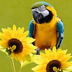 Blue-and-yellow macaw and sunflowers by LudaNayvelt
