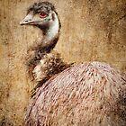 Red Eyed Emu by Whitney Mason