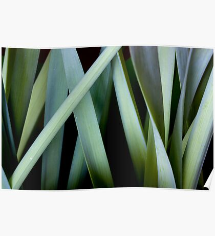 Grassy leaves Poster