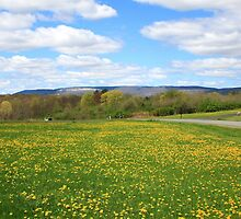 Field of Dandelion by Melissa Ann Blair