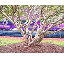 Auburn Tree Photographic Print
