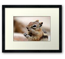 Golden Mantled Ground Squirrel (3) Framed Print