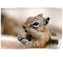 Golden Mantled Ground Squirrel (3) Poster