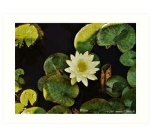 Lilly Pond Art Print