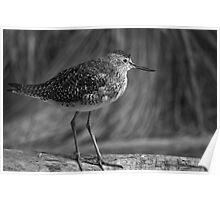 Lil Bird... Poster