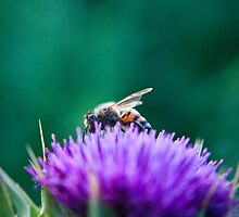 The Bee & The Thistle by Jonathan Coe
