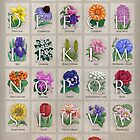 The Floral Alphabet by Stephanie Smith