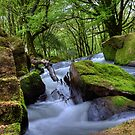 Golitha Falls Bodmin Moor II by David Wilkins