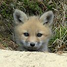 Red Fox kit by okcandids